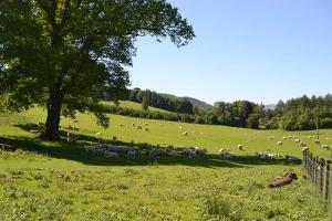 Bolfracks Estate is an organic farm, selling prime fat lambs, prime fat cattle and organic store cattle.